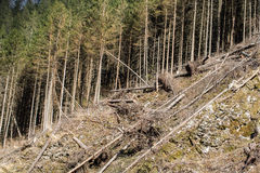 Forest being cut down turning into a dry lifeless field Stock Photography
