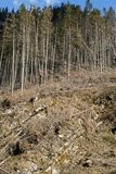Forest being cut down turning into a dry lifeless field. Royalty Free Stock Photography