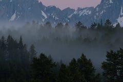 Forest Below Grand Tetons à feuilles persistantes brumeux image libre de droits
