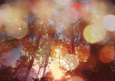 Forest from below with sunlight Royalty Free Stock Images