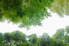 Forest From Below vert sur le blanc photo libre de droits