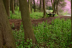 Forest Bench. Bench along path on a spring, rainy day Stock Photo