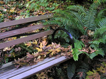 Forest Bench. Autumn leaves piled on a bench, located along a path in Seattle's Arboretum Royalty Free Stock Image