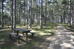 Forest and Bench for the Picnic Stock Image