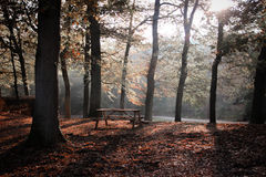 Forest bench Royalty Free Stock Images