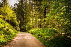 Forest in Bergen, Norway Royalty Free Stock Images