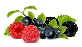 Forest berries. Stock Image