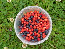 Forest berries. Blueberry and strawberry on green grass background stock photo