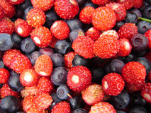 Forest berries Stock Photo