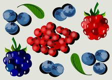 Forest berries. Abstract background with a group of berries stock illustration