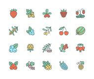 Forest berries colored flat line icons - blueberry, cranberry, raspberry, strawberry, cherry, rowan berry, blackberry. Forest berries colored flat line icons stock illustration