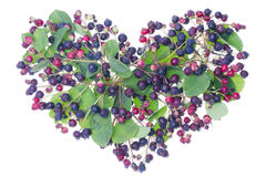 Forest berries heart Royalty Free Stock Photos