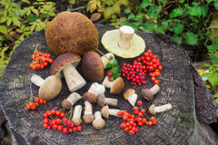 Forest berries and mushrooms on a stump Stock Photos