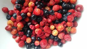 Forest berries in plate royalty free stock photos