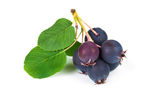 Forest berry blueberries Stock Photo