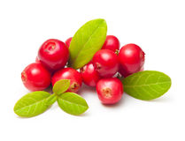 Forest berry cowberry with leaves Stock Photos