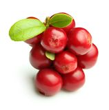 Forest berry cowberry Stock Image