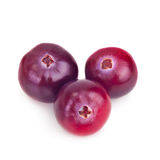 Forest berry cranberry Stock Photography