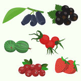 Forest berry. Flat style Vector illustration Stock Photos