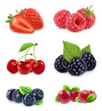 Forest berry. Sweet fruit. Realistic illustration. Vector icon set Stock Photo