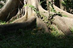 Forest And Big Tree Root Stockbilder