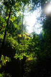 Forest and big trees at Thailand. Sun light Royalty Free Stock Images