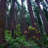 Forest Big Woo. Forest jungle big and sublime trees Stock Photography