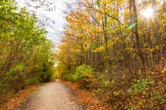 Forest bike trail in autumn royalty free stock images