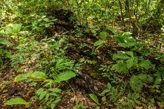 Forest Bioma Cerrado en Goias Fotos de archivo libres de regalías