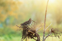 Forest bird.  Stock Photos