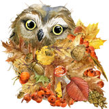 Forest bird owl Autumn nature colorful leaves background , fruit, berries, mushrooms, yellow leaves, rose hips on black background Royalty Free Stock Images