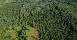 Forest from a bird`s eye. In summer day stock footage