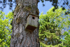 Forest birdhouse Royalty Free Stock Image