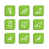 Forest birds. Set with icons - forest birds. A vector Royalty Free Stock Image