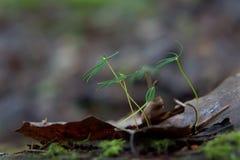 Forest Birth Fotografia Stock