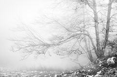 Forest in black and white Stock Photo