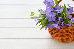 Forest blue flowers in a basket Royalty Free Stock Photos
