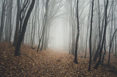 Forest with blue fog on cold morning Stock Image