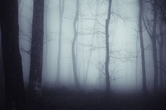 Forest with blue fog Stock Image