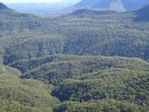 Forest in the blue mountains Royalty Free Stock Photography
