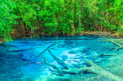 Forest Blue Pool Krabi Province, Thailand Royalty Free Stock Images