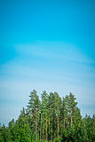 Forest and blue sky Royalty Free Stock Image