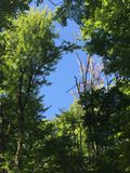 Forest blue sky view. Amazing view inside the deep forest Stock Image