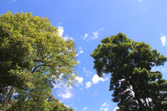 Forest with blue sky. View with garden and flowers Royalty Free Stock Photo