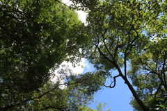 Forest with blue sky. View with trees and blue sky Stock Images