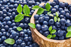 Forest blueberries Royalty Free Stock Photos