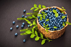 Forest blueberries Royalty Free Stock Photography