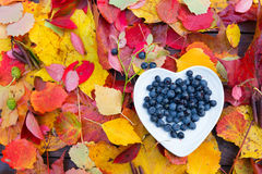 Forest blueberries heart plate colorful fall leaves wooden background autumn Royalty Free Stock Photography