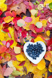 Forest blueberries heart plate colorful fall leaves wooden background autumn Stock Photo