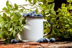 Forest blueberries. Stock Photos